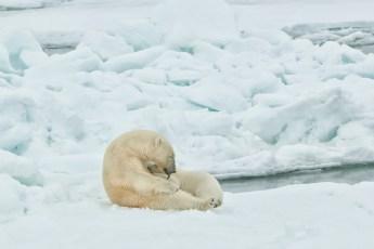 Svalbard nursing and grooming