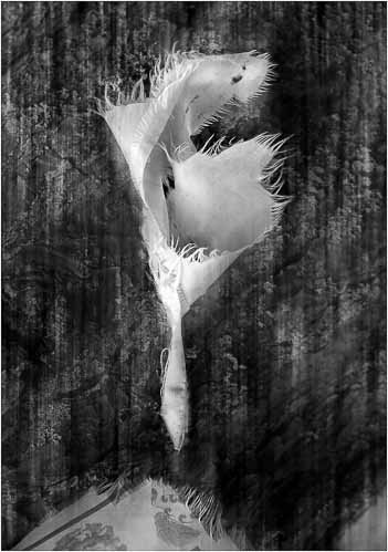 Dancing Prayer Flag by Ian McNaught