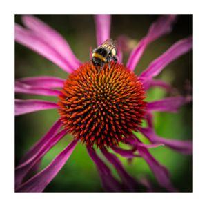 Martin Ashford - Bee Careful