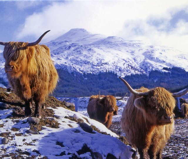 Christmas Card Published By Rsaib Scotlands Charity Helping People Who Have Depended On The