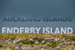 EnderbyIslandSplash_EAW_1711-Edit6x4WEB