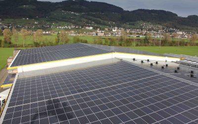 Chicorée aus Marbach wächst mit Hilfe von Sonnenstrom