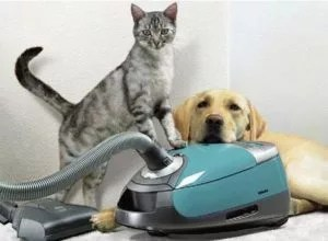 dog and cat with vacuum