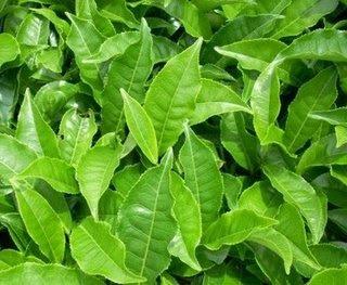 Modus kejahatan penjual daun teh (Tiek Kwan Im)