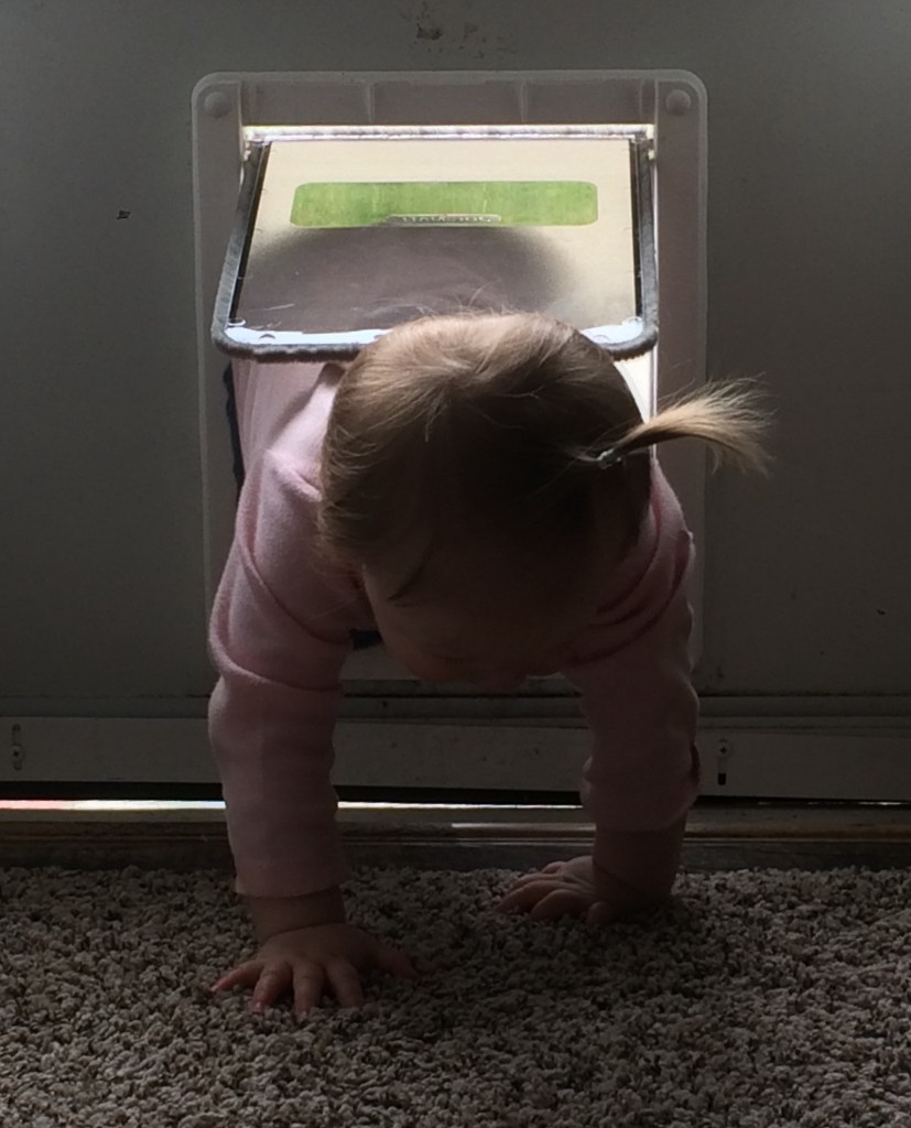 Toddler crawling through doggy door