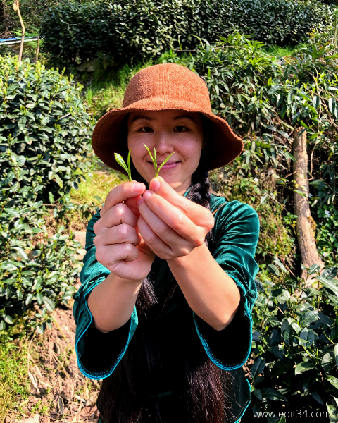 Hangzhou Longjing Green Tea Fields Tour Guide China Travel Itinerary