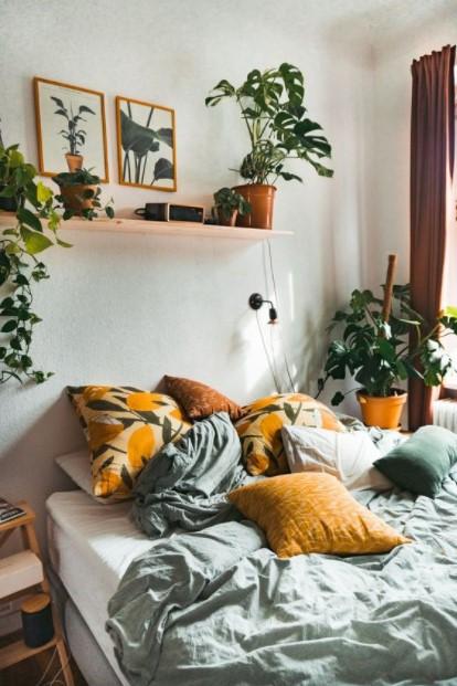 φυτά κρεβατοκάμαρα μονστέρα