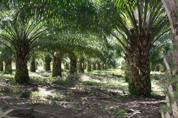 College of Agric Iguoriakhi: 50 students begin 3-month training at Okomo Oil
