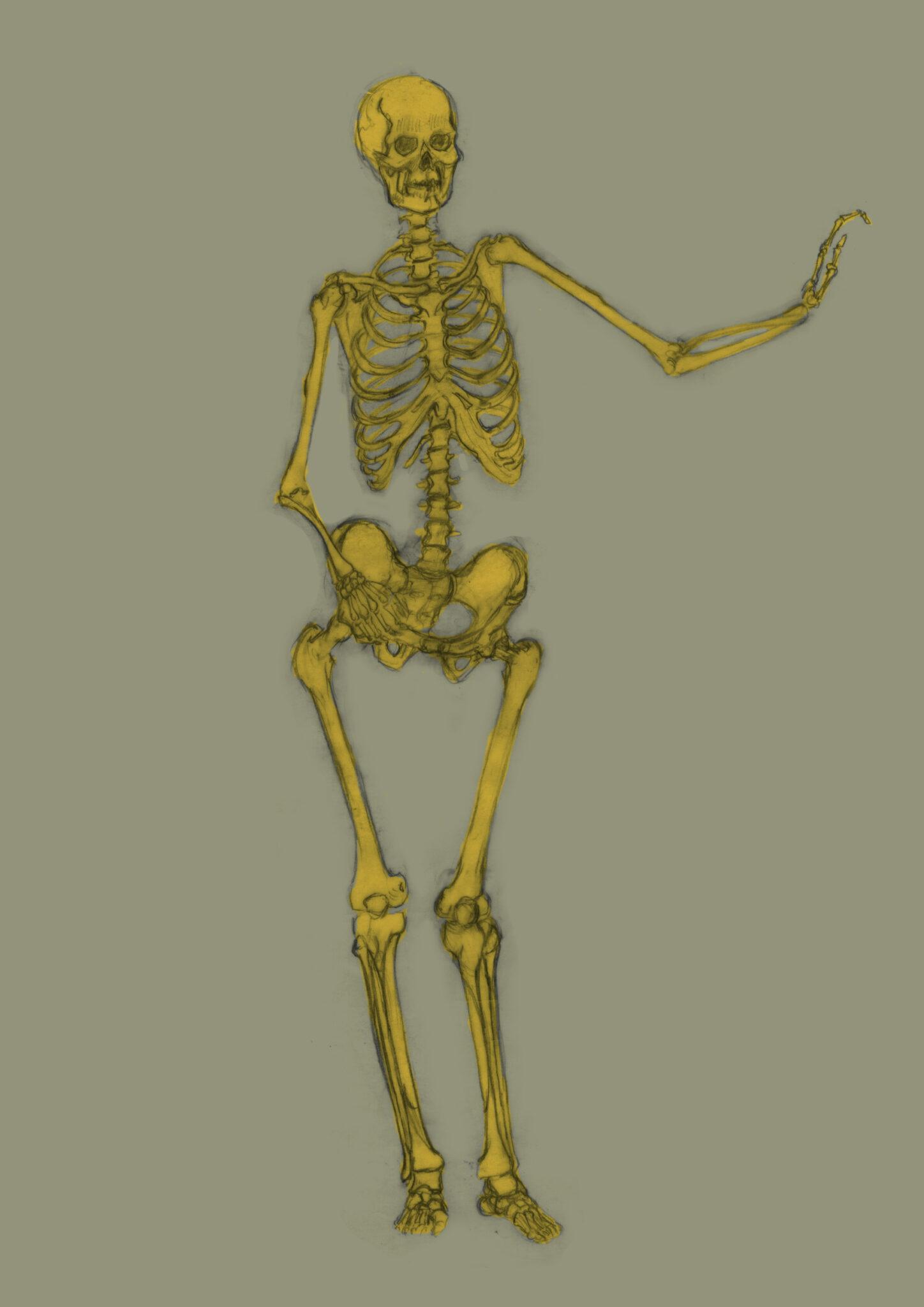 Squelette (crayon, colorisation numérique)