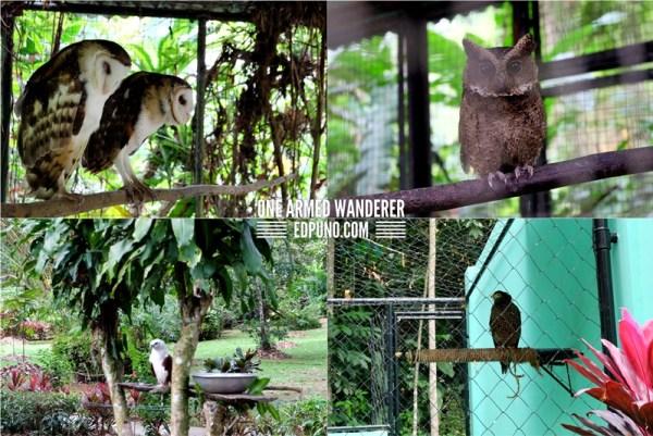 Bird species philippines