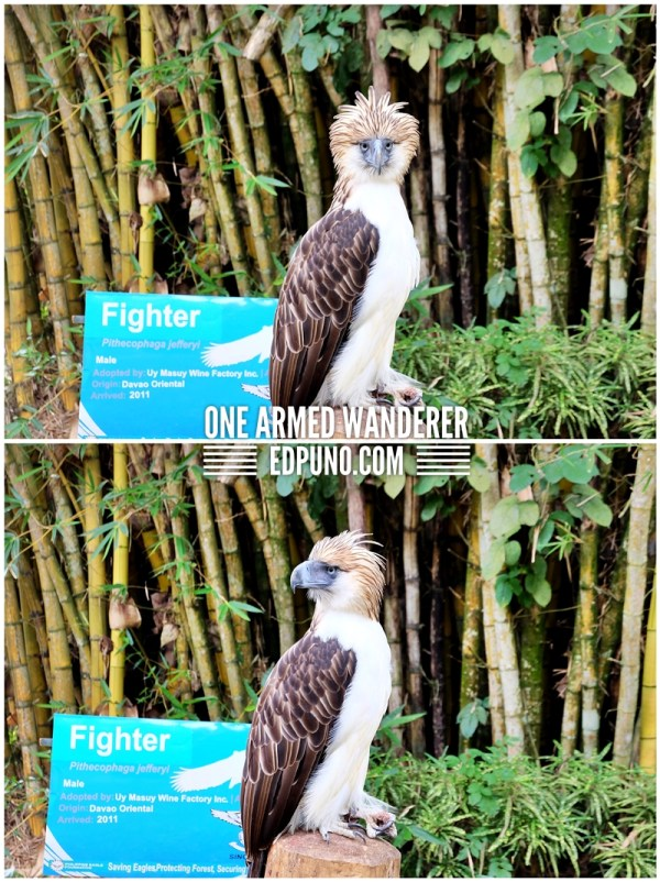 Philippine Eagle Fighter