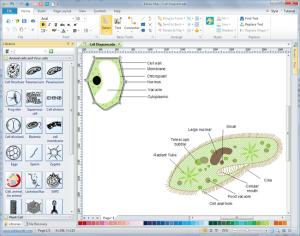 Cells Diagrams  Free Download Cells Diagram Software
