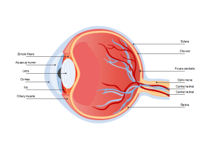 Eye Diagram | Free Eye Diagram Template