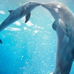 India's First Dolphin Community Reserve