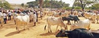 Meghalaya passes resolution opposing Centre's notification on cattle sale