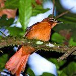 Extinct species of birds in the current decade