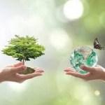 International Forest Day