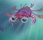 Newly discovered 'beautiful nightmare' crab