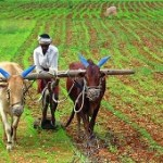 Odisha government releases draft state Agriculture Policy 2019