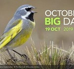 The International Bird Survey ebird organizations 2019