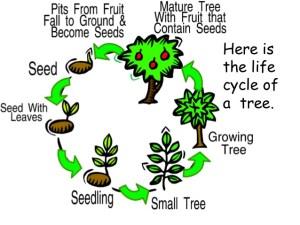 P7'S rainforest topic   Cockenzie Primary School