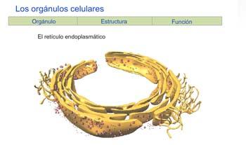 Biología y Geología. Educación Secundaria