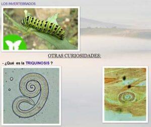 Ciencias Naturales del IES Alpujarra (Órgiva, Granada