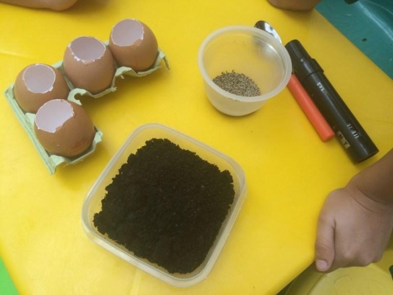 huevos-con-semillas-necesitamos