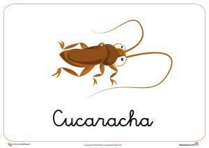 Fichas de animales e insectos: Cucaracha