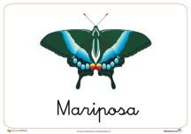 Fichas de animales e insectos: Mariposa