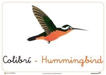 colibri ficha ave