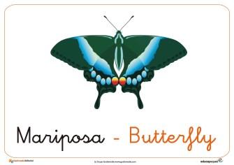 mariposa ficha insectos