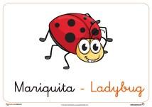 mariquita ficha insectos