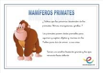 05 Mamiferos primates