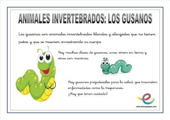 Animales invertebrados 05