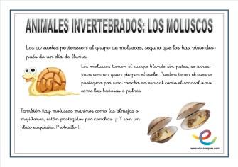 Animales invertebrados 06