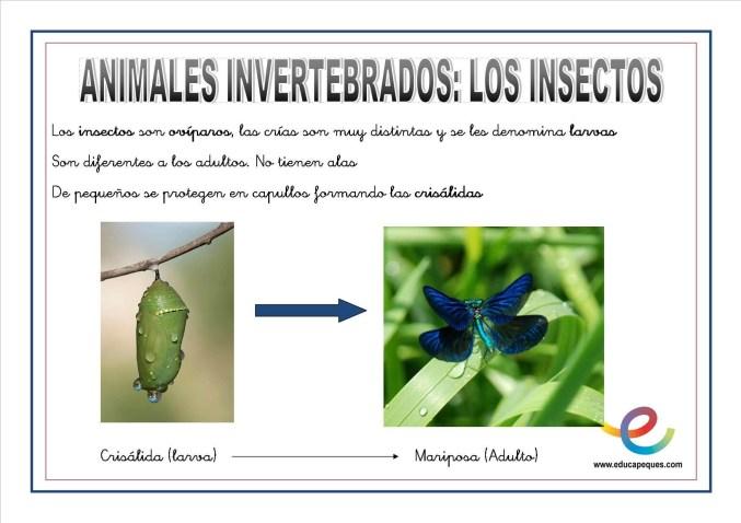 Animales invertebrados 08