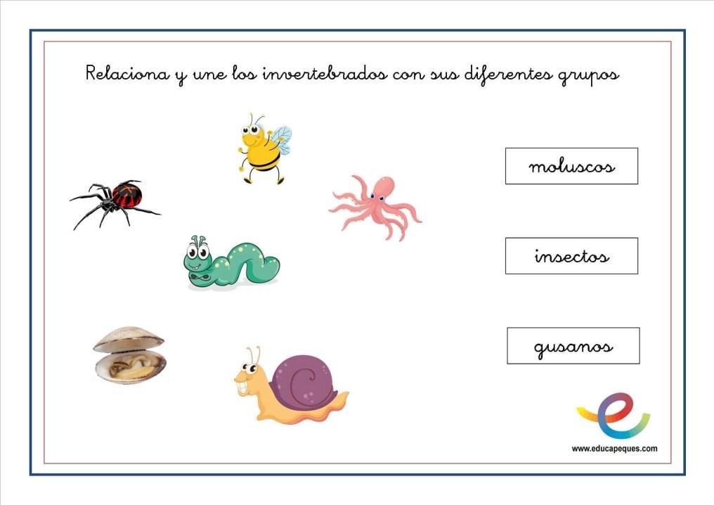 Animales invertebrados 11