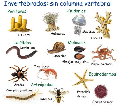 los invertebrados