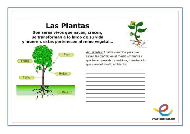 Partes y función de las plantas 2