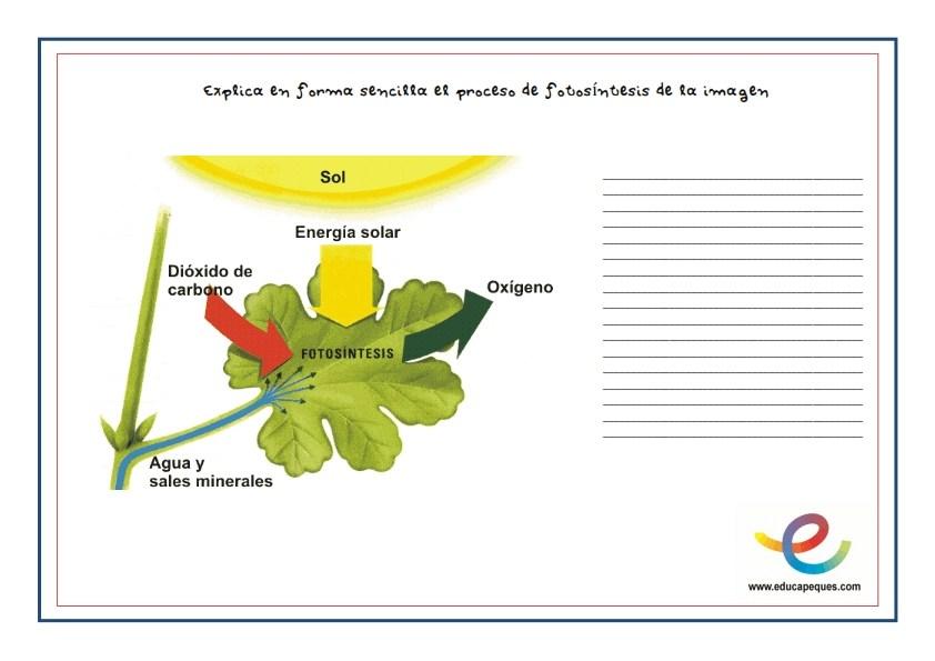 fotosíntesis, que es la fotosintesis, la fotosintesis, ciencias naturales, conocimiento del medio