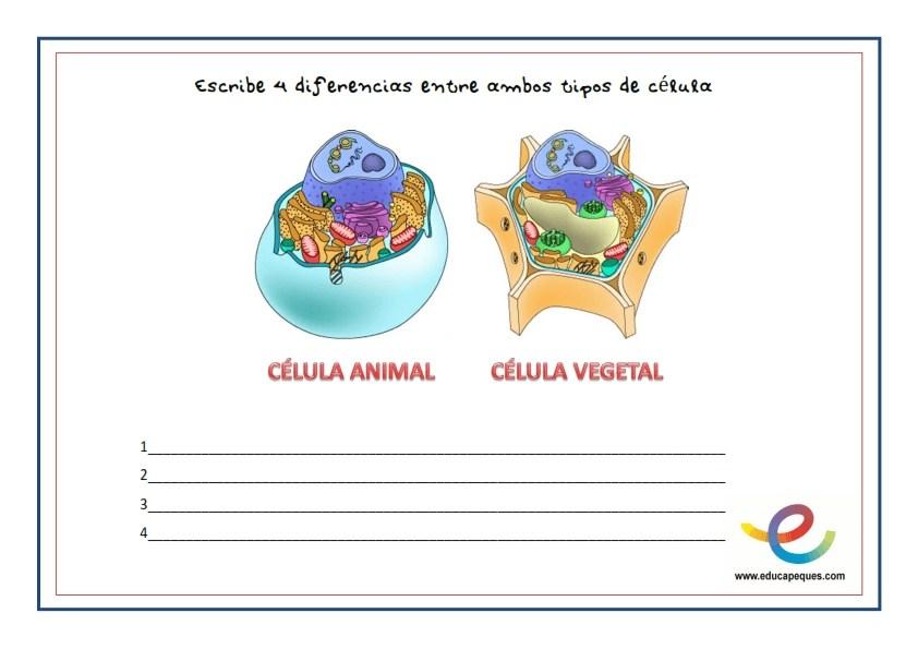 la célula, las celulas, que son las celulas, tipos de celulas, celulas animales, celulas vegetales, ciencias naturales, conocimiento del medio