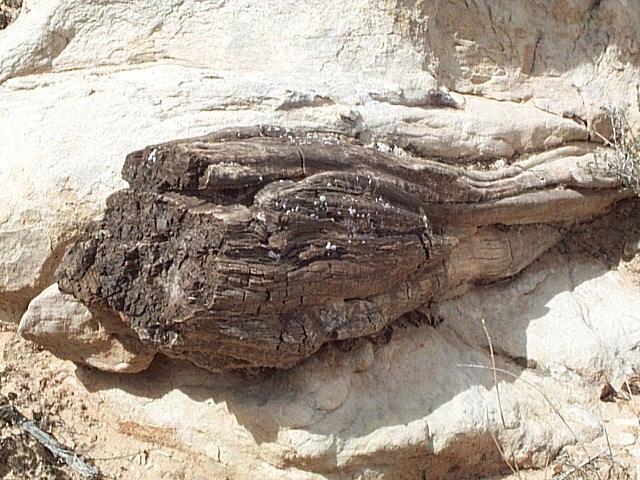 Navajo Trees2