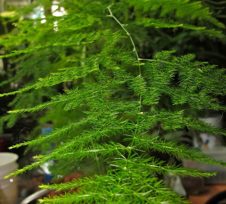 Most Popular Indoor House Plants