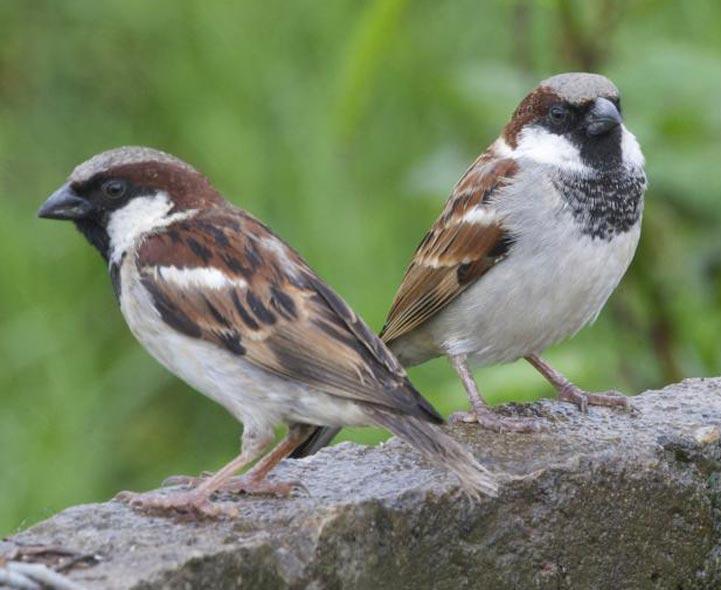 Birds making bird sounds in the garden