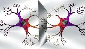 descarga Las Neuronas Espejo y el aprendizaje