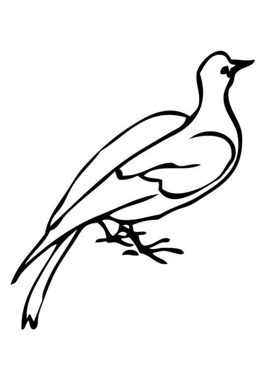 Pigeon On Branch Clip Art