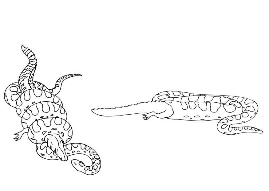 Pgina Para Colorir Anaconda Come O Jacar Img 9436