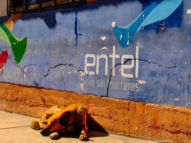 Vivir sin fronteras Yunguyo, Provincia de Yunguyo, Perú