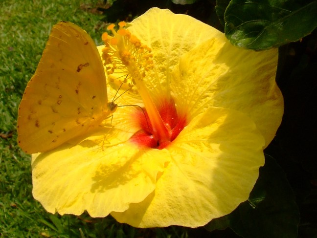 Amarillos Supía, Caldas, Colombia